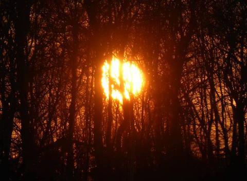 Coucher de soleil à travers les arbres