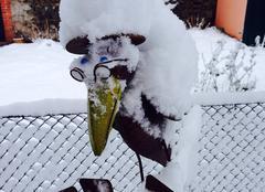 Neige Siaugues-Sainte-Marie 43300 Corbeau sous la neige