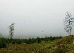 Insolite Chaumard 58120 Haut Morvan dans le nuage......