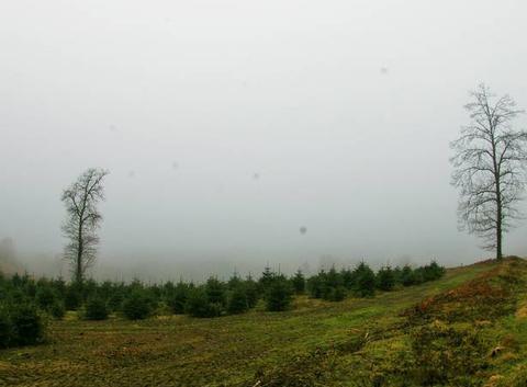 Haut Morvan dans le nuage......