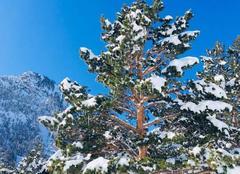 Neige Saint-Lary-Soulan 65170 Dans un écrin de ciel bleu
