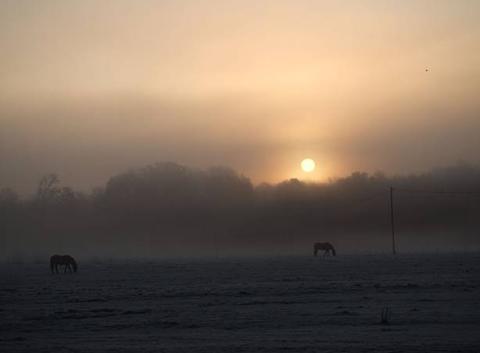 Brouillard au levé du soleil