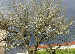 Orage Limas 69400 Cerisier