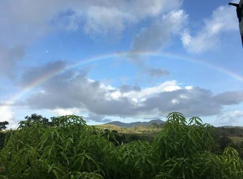 Arc en ciel en Martinique