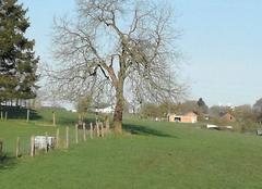Faune/Flore Libramont L'arbre