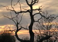 Ciel Brizambourg 17770 Coucher de soleil