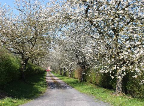 La Normandie en fleurs