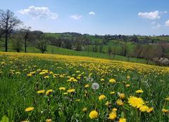 Chaleur Saint-Symphorien-sur-Coise 69590 Le printemps ou l'été  ?