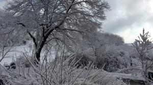 Magie d?hiver