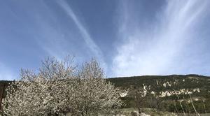 Nuages Saint-Andre-les-Alpes 04170 Cerisiers en fleurs