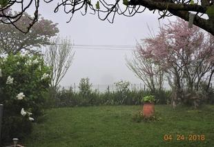 Brouillard Nogaret 31540 Brouillard de printemps.