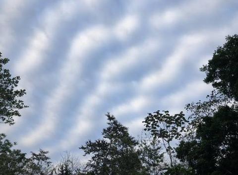 Le ciel zébré de Palenque (Yucatan - Mexique)