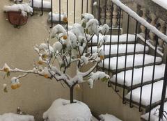 Neige Nîmes 30000 Citrons givrés...