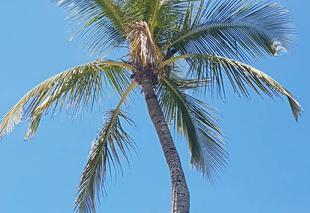 Ciel Fort myers beach Grand bleu sur fmb