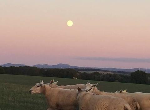 Vue sur les Vosges au lever de la pleine lune
