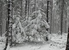 Neige Burdignes 42220 Sous la neige