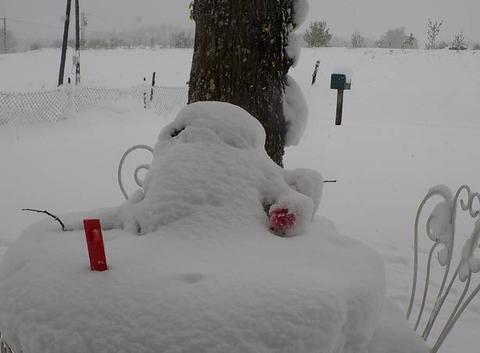 Petit bonhomme de neige de mai fin