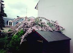 Faune/Flore Epinay-sur-Orge 91360 Fleurs