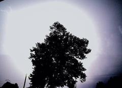 Orage Mourmelon-le-Grand 51400 Magnifique éclair derrière un arbre