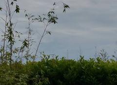 Pluie Les Sables-d'Olonne 85100 Orage et très grosses pluie et grêle sur les sables d'olonne