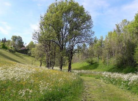 Chemin de Montépile