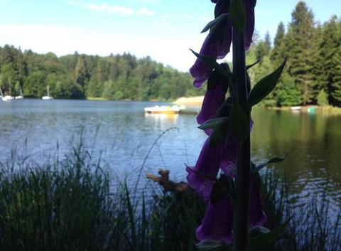 Les bordes , lac de Pierre-Percée