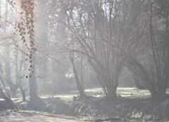 Brouillard Emance 78125 Brume