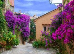 Ciel Bormes-les-Mimosas 83230 Quel beau spectacle coloré