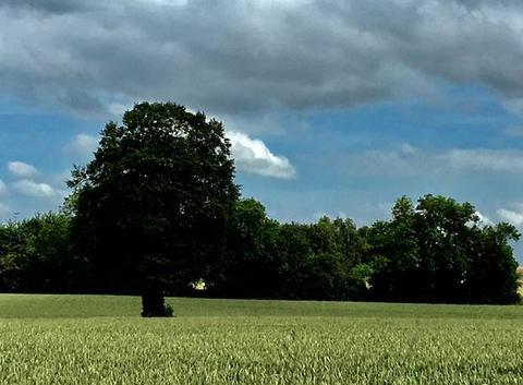 Promenade sous beau ciel normand jb.