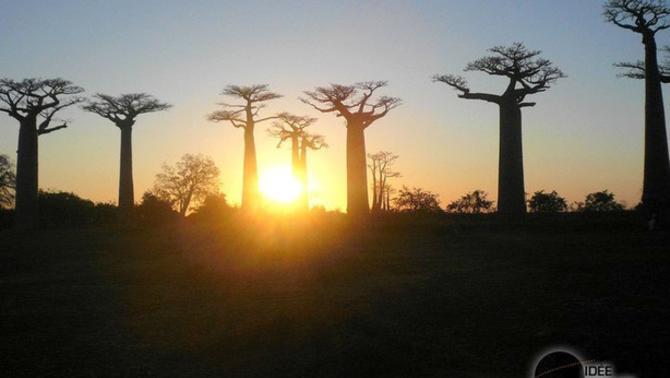 Actualités Etranger - Madagascar