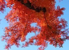 Faune/Flore Sacramento Couleurs automnales sur un ciel d'azur