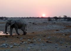 Faune/Flore Windhoek COUCHER DE SOLEIL SUR LE POINT D'EAU