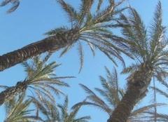 Málaga 29001 Sous les palmiers  (APPLICATION METEO - REPORTER MOBILE)