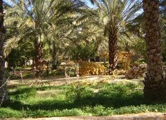 Faune/Flore Biskra Palmiers dattiers