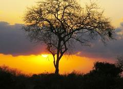 Ciel Nairobi Coucher de soleil
