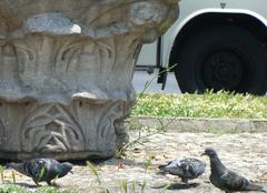 Faune/Flore Istanbul Oiseaux archéologiques