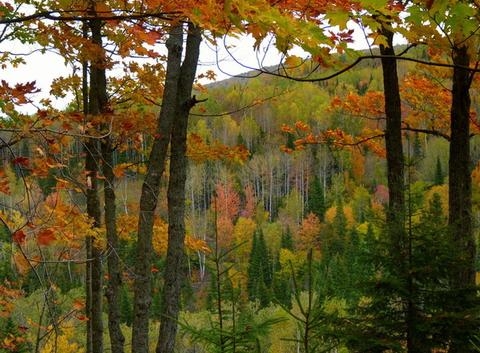Couleurs de l'automne en Gaspésie