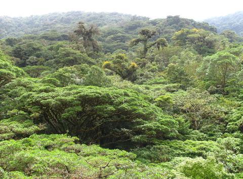 Forêt tropicale nuageuse