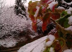 Batna sous la neige