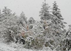 Neige La Brigue 06430 Premières neiges