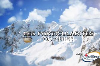 Vidéo Chiens d'avalanches