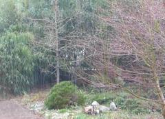 La Vraie-Croix 56250 Pluie et vent pour la journée