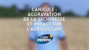 Vidéo Canicule : aggravation de la sécheresse, impacts sur l'agriculture