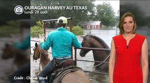 Vidéo Ouragan Harvey : les animaux en détresse
