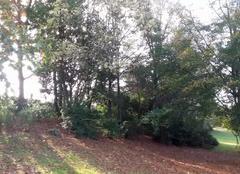 Nantes 44000 Couleurs d'automne sur les bords de l'erdre.