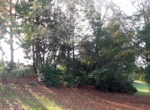 Couleurs d'automne sur les bords de l'erdre.