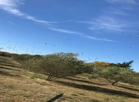 Migration d'oiseux