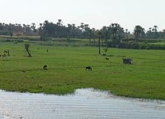 Au fil du Nil